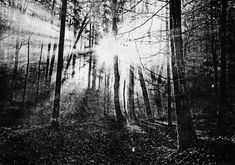 #forest #sun #art #print With a unique technique, I print photorealistic images on paper. For my prints, I use ink and a hand printing press. Every printing stencil has to be handmade and is just usable for one print. It reminds me of the time when I was shooting black-and-white film – then going into the darkroom and working on some negative prints. Now, in a digital world, I have the possibility to go back to the roots and print unique art once again. Sun Art, Printing Press, Unique Art, Roots, Stencils, To Go, Ink, Art Prints, Black And White