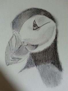 My puffin :)
