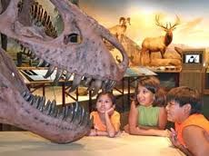 Millions of years before the formation of the Missouri River in Montana, dinosaurs made this once lush wetland their home. Today the lazy river has forged its way through a variety of geological formations, including the Montana Badlands.