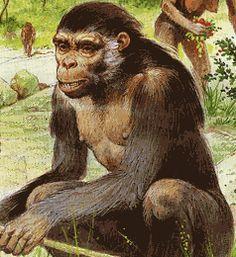 Orrorin tugenensis es una especie de homínido fósil encontrado en las proximidades de la localidad de Tugen. La morfología de los Orrorin era notablemente similar a la de los actuales chimpancés.