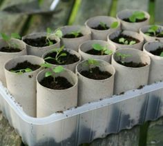 Genius paper towel roll reuse idea!  I'm ready to start my garden already!