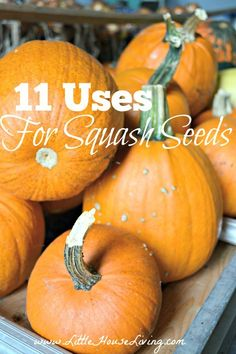11 Uses for Squash Seeds | Little House Living | 11 Ways to use squash seeds in your life and some yummy pumpkin and squash recipes for the rest of the vegetable!