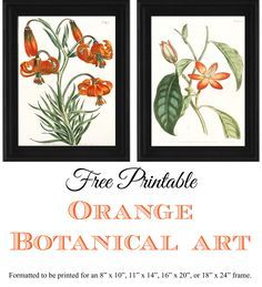 "Free Printable Orange Botanical Art. Formatted to be print for an 8"" x 10"", 11"" x 14"", 16"" x 20"", or 18"" x 24"" frame."