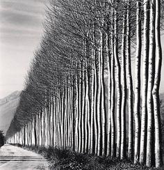 Michael Kenna Poplar Trees, Fucino, Abruzzo, Italy 2016