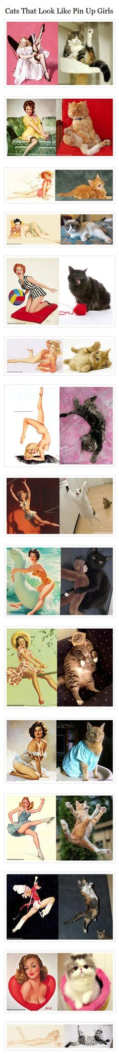 Pin up cats
