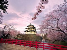 Cerezos en flor de todo el mundo (© ASSOCIATED PRESS)