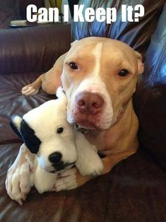 Big dog protecting small puppy Animals And Pets, Baby Animals, Funny Animals, Cute Animals, Cute Puppies, Cute Dogs, Dogs And Puppies, Doggies, Pit Bull Puppies