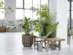 Green plants on a rustic bench, urban jungle. More inspiration at www. Large Plants, Green Plants, Tropical Plants, Design Vase, Deco Design, Indoor Garden, Indoor Plants, Home And Garden, Potted Plants