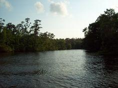 Mandeville, Louisiana Photos from the Tchefuncte River Covington Louisiana, North Shore, Mandeville Louisiana, River, Nature, Southern, Wanderlust, Outdoor, Photos