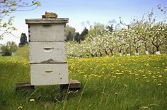 Choose the Right Hive for You and Your Bees - Homesteading and Livestock - MOTHER EARTH NEWS