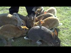 Rabbit Island, Japan; http://travelswithcarole.blogspot.com/2013/09/sights-to-see-okunoshima-rabbit-island.html