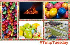 15/04 #TulipTuesday looks at some Dutch facts around the Easter holiday; 1. In the North, look out for Easter Fires (Paasvuren). Whilst no-one is entirely sure why it began, it's thought to chase away winter & welcome spring.  2. The Easter Mass flowers at St Peter's Basilica (Rome) are Dutch. Around 42,000 flowers & garden plants are given. 3. Over the 2013 Easter weekend 35 million eggs were consumed in NL, that's around two eggs per person. Possibly eaten, but maybe painted, we're not…