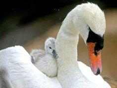 Avec maman... ...