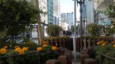 Canteiro de Flores da rua XV - Rua das Flores