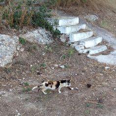 Alexandris Hotel in Spetses Island Kitten, Island, Cats, Outdoor Decor, Cute Kittens, Kitty, Gatos, Kitty Cats, Islands