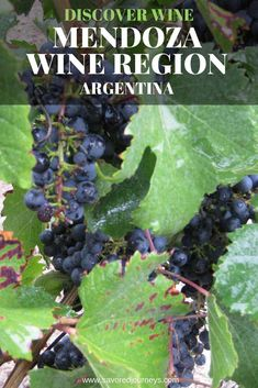 Discover the Mendoza wine region in Argentina. Where to taste wine in Mendoza. Mendoza hotels. #winetasting