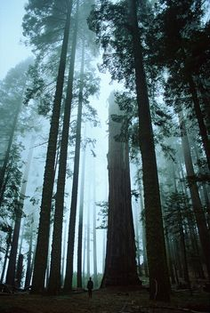 Forks, Washington. The Place where Twilight is shot is actually quite Mesmerizing !