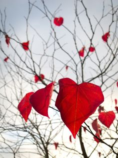 Tree in Love via http://Forest-of-Peace.org