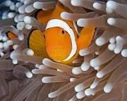 Oh here's nemo.  Found him!