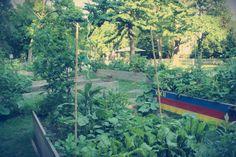 Horticultura Biológica