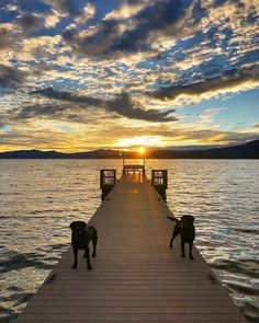 """6cfc83670 Design With Dogs In Mind on Instagram: """"Loving Lake Pawhoe..see what I did  there?! #punny 🌅@nturnerdesign"""""""