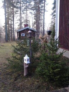 Lintujen talviruokinta: kuuset ja pihlajat haettiin metsästä ja laitettiin suojaamaan lintujen ruokailua.