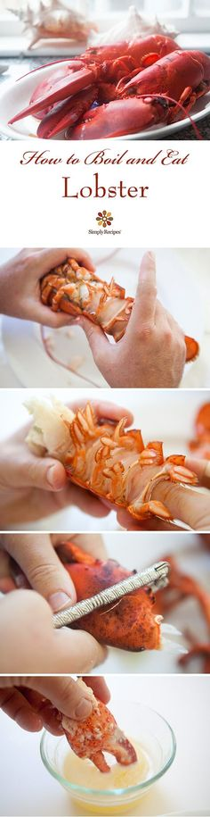 A visual guide with instructions to boiling and eating fresh New England lobster. ~ SimplyRecipes.com