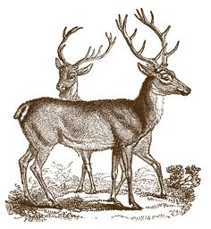 FREE Woodland Vintage Clip Art - Lovely Deer - Christmas - The Graphics Fairy