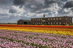 Flowers II by Watze D. de Haan