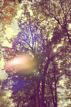 sunshine through the trees :)