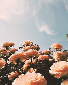 roses and sky aesthetic vintage wallpaper background Peach Aesthetic, Nature Aesthetic, Flower Aesthetic, Aesthetic Girl, Summer Aesthetic, Aesthetic Vintage, Flor Iphone Wallpaper, Flower Wallpaper, Wallpaper Backgrounds