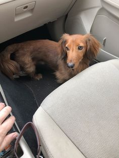 Two hour drive ahead of us. After almost 18 months as my foster boy Charlie is heading to his potential home for his two week trial run. Wish him luck! https://i.imgur.com/wvvZhNl.jpg