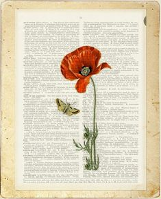 poppy II vintage artwork printed on page from old by FauxKiss