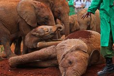 David Sheldrick Elephant Sanctuary by rabbit.Hole, via Flickr