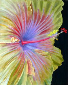 Chinese Hibiscus - pastel by ©Robert Cook (via FineArtAmerica)