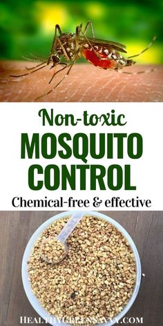 This easy, non-toxic product helps keep your yard mosquito-free all season long. We've been using these non-toxic granules to keep mosquitoes from breeding in our yard for four seasons now! (product review) #nontoxicpestcontrol #mosquitocontrol #nontoxic #naturalmoquitocontrol #naturalbugcontrol Mosquito Control, Bug Control, Pest Control, Herbal Remedies, Natural Remedies, How To Make Everything, Green Living Tips, Garden Maintenance, Organic Gardening Tips