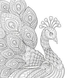Displaying Peacock Coloring Page.jpg