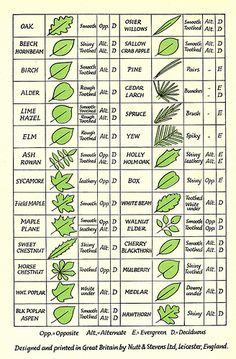 Great resource for art projects this spring - Leaf Identification from spratmackrel via Flickr