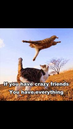 It's all about finding people who are your kind of crazy Best Friends Funny, Crazy Friends, Cute Friends, Happy National Bestfriend Day, Silly Cats Pictures, Cat Memes, Funny Memes, Funny Looking Cats, Funny Animals