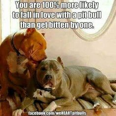 That's the truth!  Or get bit by a tiny yapper!