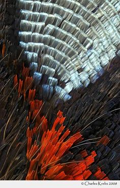 MicroPicx: Butterfly wing scales