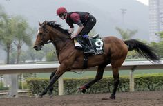 """He's travelled well and everything is good,"" Globetrotting Highland Reel in top shape for Hong Kong Vase defence"