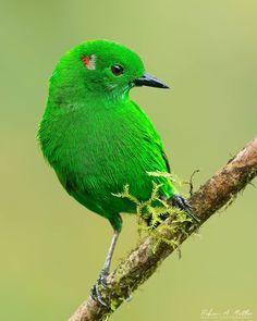 Funny Birds, Cute Birds, Pretty Birds, Small Birds, Colorful Birds, Little Birds, Birds Pics, Beautiful Creatures, Animals Beautiful