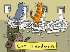 cat treadmills…
