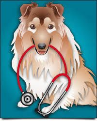"""""""Bristol Veterinary Hospital"""" is one of the trusted local pet hospitals in Mississauga offering expert pet health care services. We deliver pet emergency servi… Veterinary Services, Medical Billing, Interesting News, Pet Health, Your Pet, Sick, This Is Us, Superior Quality, Pets"""