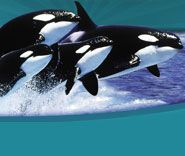 Sea World Texas in San Antonio.  It was the one place my children visited annually from the time they were infants.