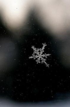snowflake / Winter Solstice