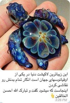 bipfa_3b9ba9aba0090593713f69494c2a93da.jpg - this is the most beautiful turtle in the world ....: