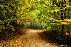 Photo: Mountain road in autumn colours