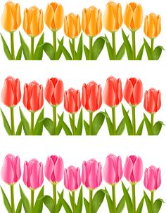 "Photo from album ""Тюльпаны"" on Yandex. Diy And Crafts, Crafts For Kids, Paper Crafts, Page Borders Design, Grass Flower, School Frame, Borders For Paper, Flower Clipart, Floral Border"